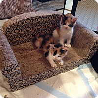Adopt A Pet :: Ginger and peaches - Whitestone, NY