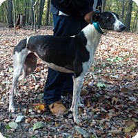 Adopt A Pet :: JS Turner Over - Gerrardstown, WV