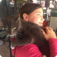 Adopt A Pet :: Autumn - Gilbert, AZ