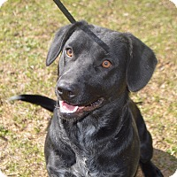 Adopt A Pet :: ZOEY - Cranston, RI