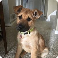Adopt A Pet :: Carly - Columbus, OH