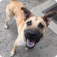 Adopt A Pet :: Jax Teller - Jersey City, NJ