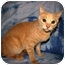 Photo 3 - Domestic Shorthair Cat for adoption in Norwich, New York - DJ