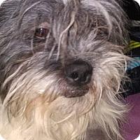 Adopt A Pet :: Maverick - Lorain, OH
