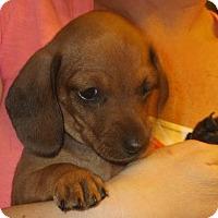 Adopt A Pet :: Giselle - Greenville, RI