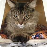 Adopt A Pet :: Monika - New Port Richey, FL