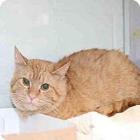 Adopt A Pet :: *NACHO CHEESE* - Salt Lake City, UT