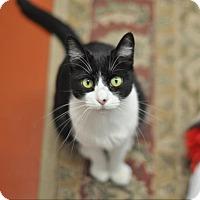Adopt A Pet :: Katie (Cocoa Center) - Cocoa, FL