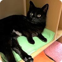 Adopt A Pet :: Tootsie - Barrington Hills, IL
