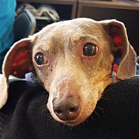Adopt A Pet :: Sonny - Freeport, NY