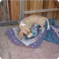 Adopt A Pet :: Autry - Phoenix, AZ