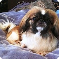 Adopt A Pet :: JOSEPHINE and PENNY - Sunderland, MA