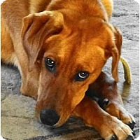Adopt A Pet :: MAGGIE MAE - Essex Junction, VT