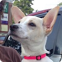 Adopt A Pet :: Peggy - Homewood, AL
