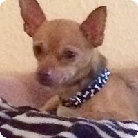 Adopt A Pet :: Tonto - Edmond, OK