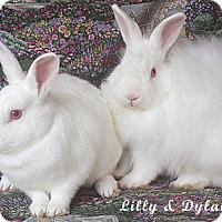 Adopt A Pet :: Lilly - Santa Barbara, CA