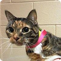 Adopt A Pet :: Gigi - McDonough, GA