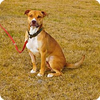 Adopt A Pet :: Clancy-101105j - Tupelo, MS