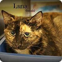 Adopt A Pet :: Luna - Springfield, PA