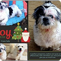 Adopt A Pet :: Felix - Bastrop, TX