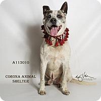 Adopt A Pet :: KENNEL 32 - Corona, CA