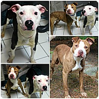 Adopt A Pet :: Drake & Dover - Forked River, NJ