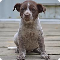 Adopt A Pet :: Knox - Groton, MA