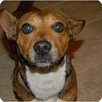 Adopt A Pet :: Georgie - Murfreesboro, TN