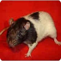 Adopt A Pet :: Joe - Winner, SD