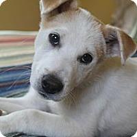 Adopt A Pet :: Kay Kay - Wytheville, VA