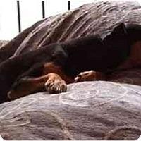 Adopt A Pet :: Hunter - Phoenix, AZ