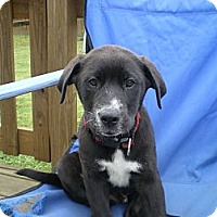 Adopt A Pet :: King Arthur - Apex, NC
