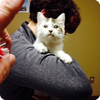 Adopt A Pet :: Zander - Troy, OH