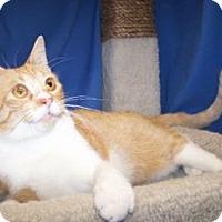 Adopt A Pet :: Alfred - Colorado Springs, CO