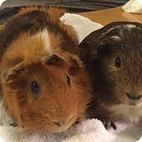 Adopt A Pet :: Mushu and Chewie - Williston, FL