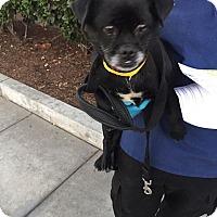 Adopt A Pet :: Luther - Anaheim, CA