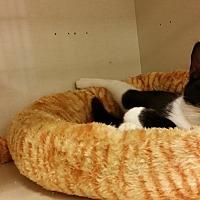 Adopt A Pet :: TC - Westbury, NY