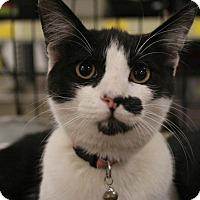 Adopt A Pet :: Gertie - Rosamond, CA
