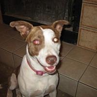 Adopt A Pet :: Angel - San Antonio, TX