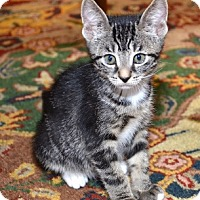 Adopt A Pet :: Lexus - Davis, CA