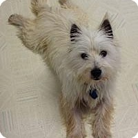 Adopt A Pet :: Hunter - Omaha, NE