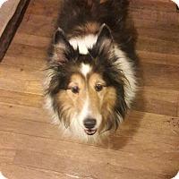 Adopt A Pet :: Trevor - Eastpointe, MI