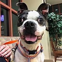 Adopt A Pet :: Kato - Huntington Beach, CA
