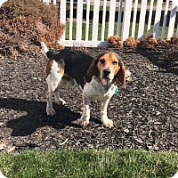 Adopt A Pet :: Tucker - New Oxford, PA