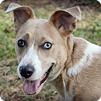 Adopt A Pet :: Diamond ~ meet me! - Glastonbury, CT