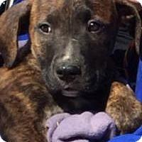 Adopt A Pet :: Zeus - Marlton, NJ