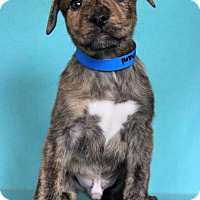 Adopt A Pet :: Richard - Waldorf, MD