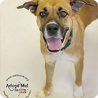 Adopt A Pet :: Holly - Phoenix, AZ