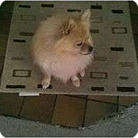 Adopt A Pet :: Buddy - Chesapeake, VA