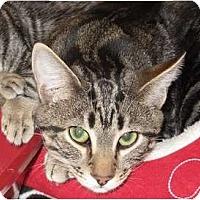 Adopt A Pet :: CocoPuff - Port Republic, MD